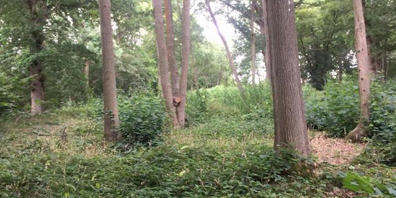 Woodland management in Kent